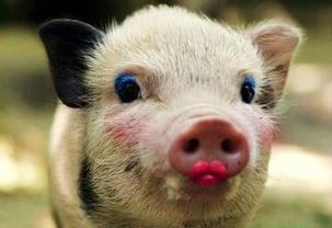 lipstick on a pig